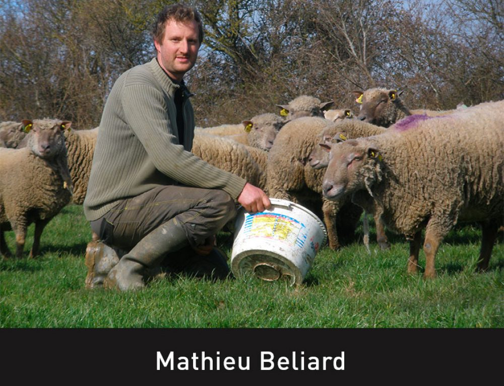 Un nouveau producteur pour l'agneau à la Ferme Angevine